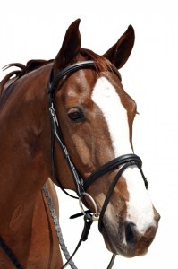 Capriole-Raised-Bridle