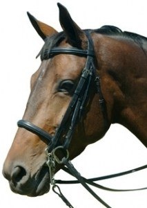Equibette-Padded-Double-Bridle
