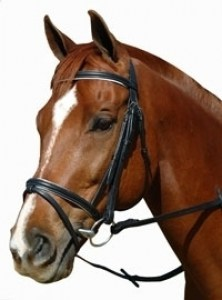 Equibette-Padded-Flash-Bridles