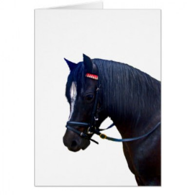 welsh pony bridle